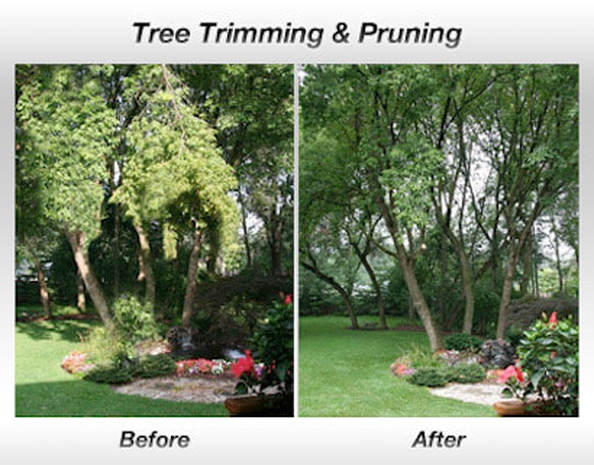 Tree Trimming Before and After Pensacola FL
