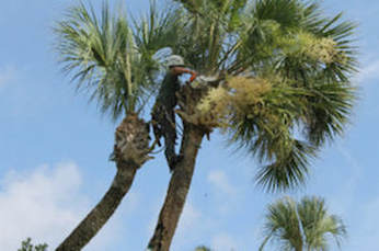 Tree Trimming Pensacola Tree Service