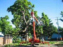 Tree trimming using a tracked lift